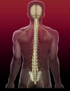 Причины радикулита спина