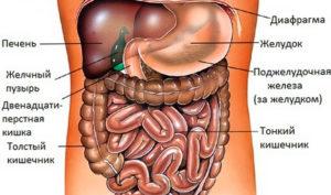 болезни желудка