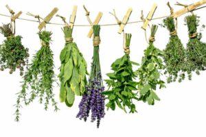 Лекарственные растения  в составе сборов.
