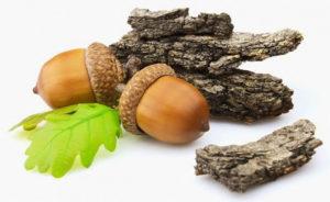 Отвар коры дуба регулирует работу желез и препятствует размножению микроорганизмов