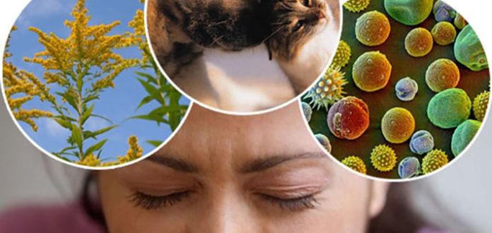 народные средства лечение аллергии