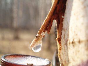 Пиелонефрит лечение терапия соками