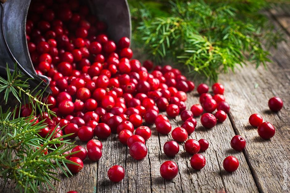 от запоров ягоды брусники