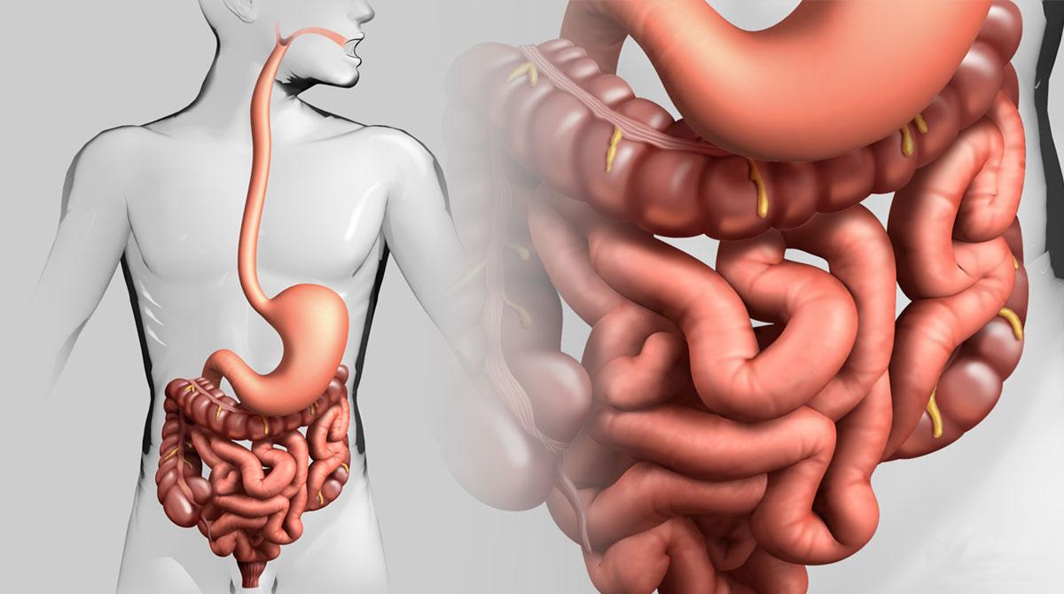 очищение кишечника от последствий после травли паразитов