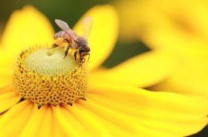 пробудить сексуальную энергию Цветочная пыльца способна