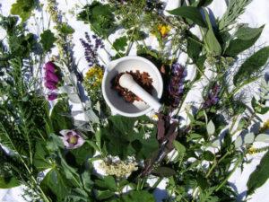 Снизить давление помогут Растения, обладающие гипотензиным эффектом