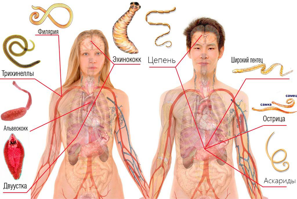 как вывести паразитов из организма народными способами