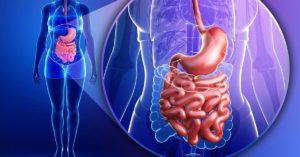 для лечения заболеваний внутренних органов расторопша