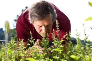 для мужчин эффективные травы