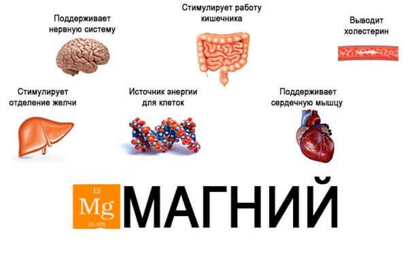 При недостатке магния страдает сердечно-сосудистая система