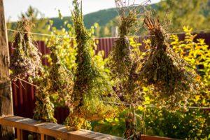 как вылечить миому матки травяными сборами