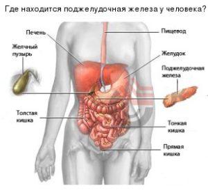 где находиться поджелудочная железа